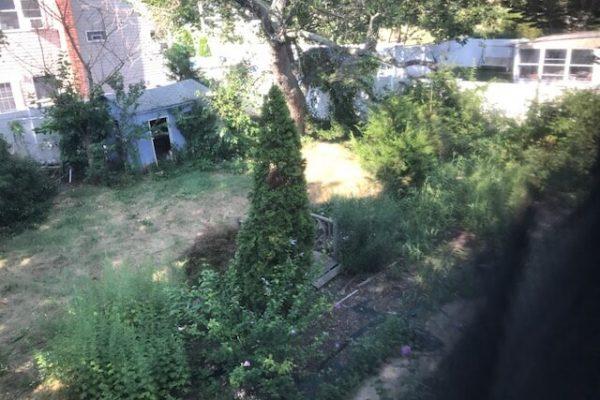 backyard before photo